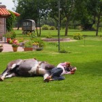 Ahhh.....so sleepy. Good job there's a nice horse to rest on