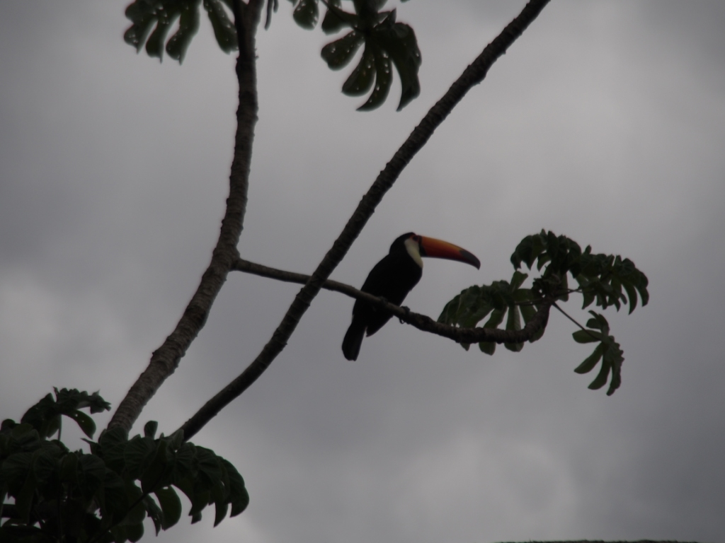 The toucan was pretty cool too. Still don't know how they fly with that beak.....