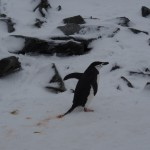 Yeah! Our first penguin sighting. CUTE!!