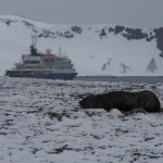 Oh, and a seal, posing conveniently in front of the ship