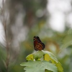 Pretty butterfly. More camera love