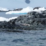 Seal. Just in case you're bored of icebergs by now