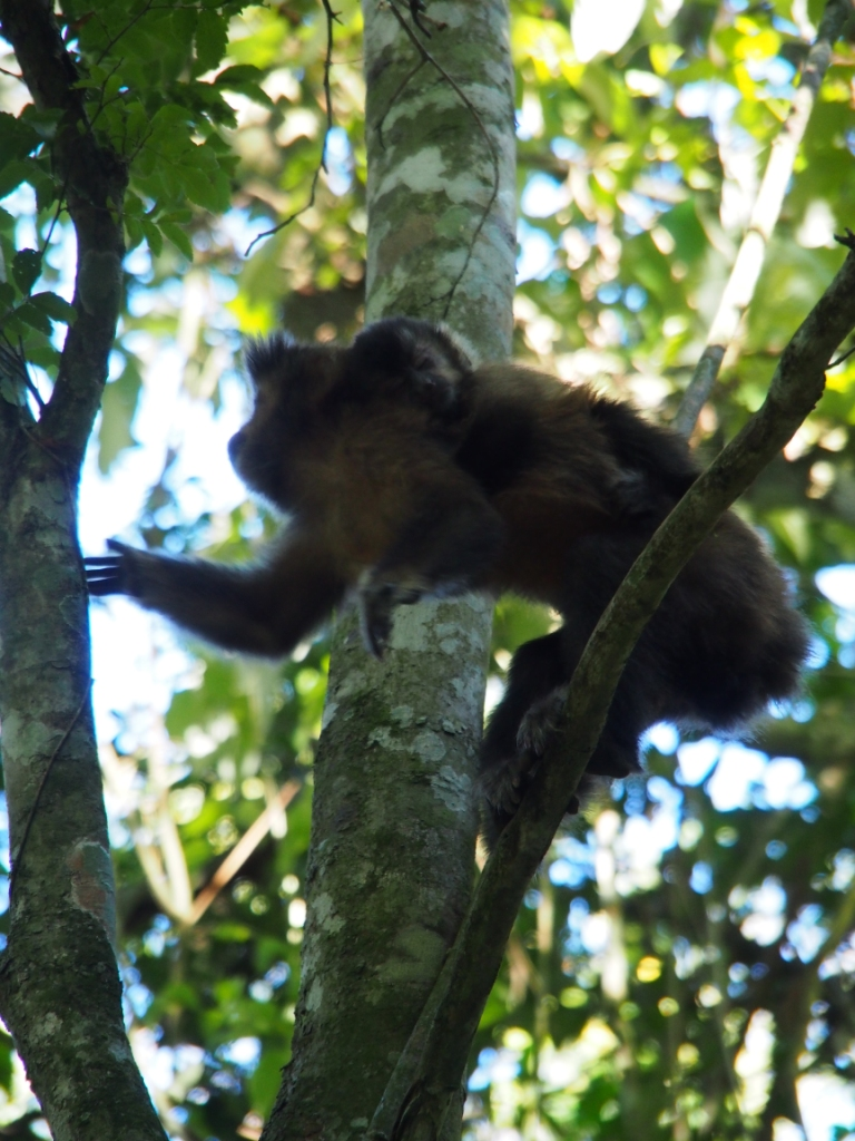 The monkey didn't worry me too much given it was up a tree