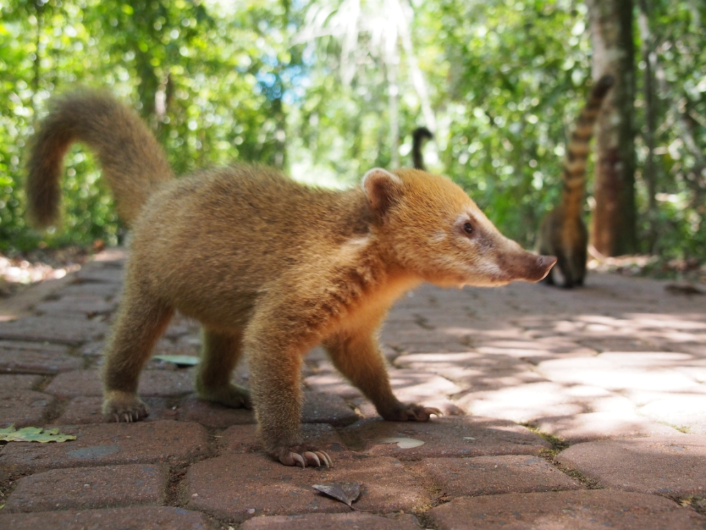 But those attack coatis - see why I was so scared!!