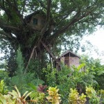 The tree house. Me Tarzan, you Lucy