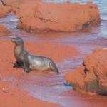 Sea lions on Mars!