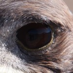 Extreme close up of Mr Eagle's eye, in which you can see the party reflected. ARTISTIQUE OVERLOAD!